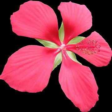 wunderschöne rote Blüte, Blume, Natur von rhnaturestyles