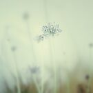 Taken for Granted by RichCaspian