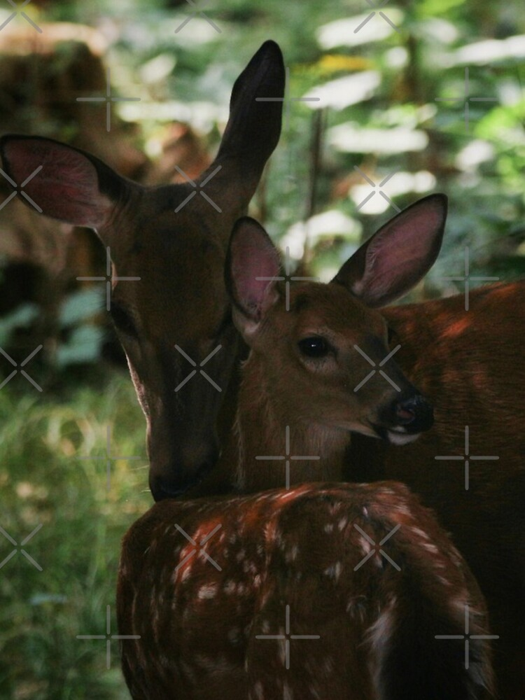 Mother and Fawn by debfaraday