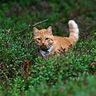 On The Prowl II by SunDwn
