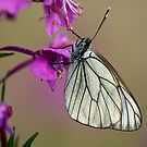 Butterfly by markosixty6