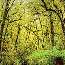 NZ  Forest by GabrielK
