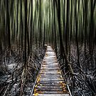 Mystical Walk by infinitephotos