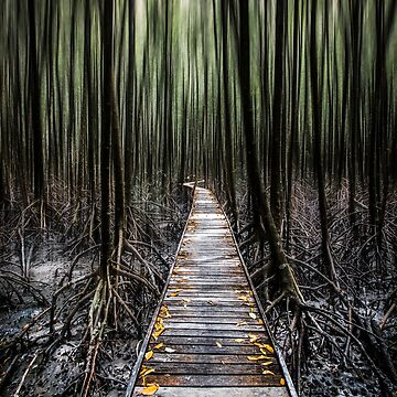 Mystical Walk by infinitephotos