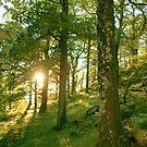Sun through trees by Gillen
