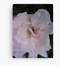 A slip of a Rose Canvas Print