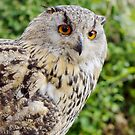 Eagle Owl with glowing eyes by MarionsArt