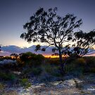 Rugged Beauty, Kalbarri, WA by Malcolm Katon