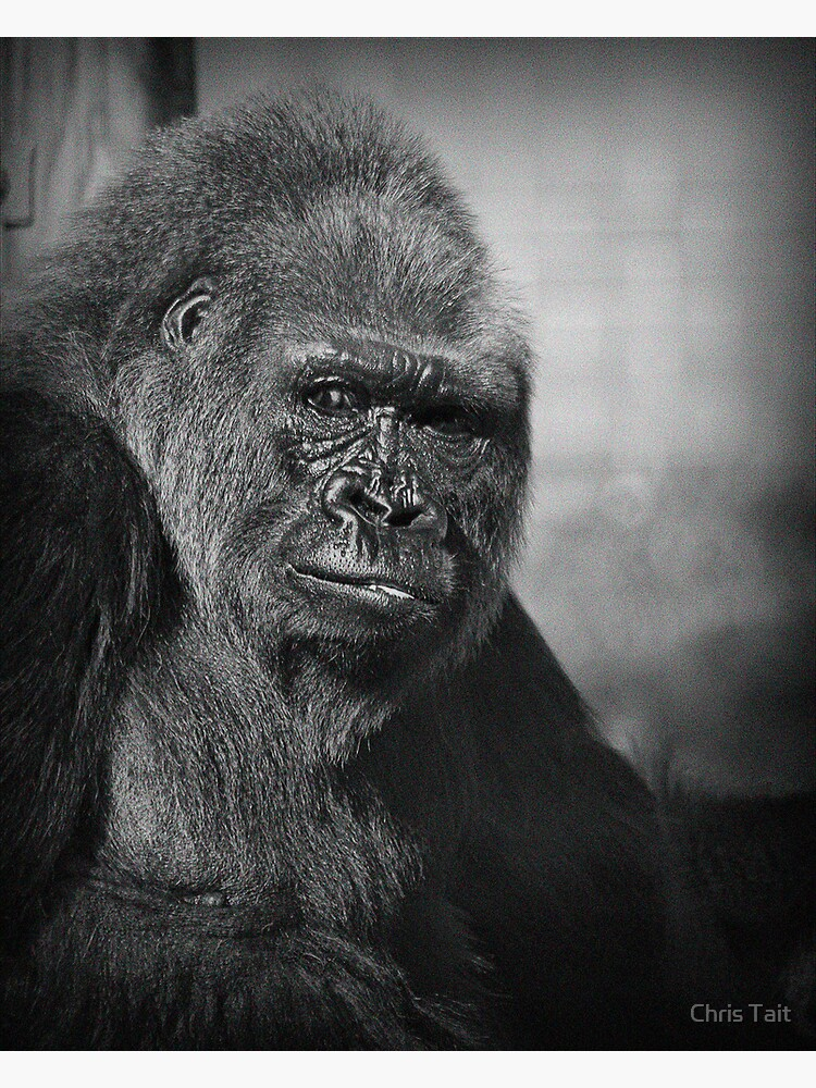 King Kong by christait