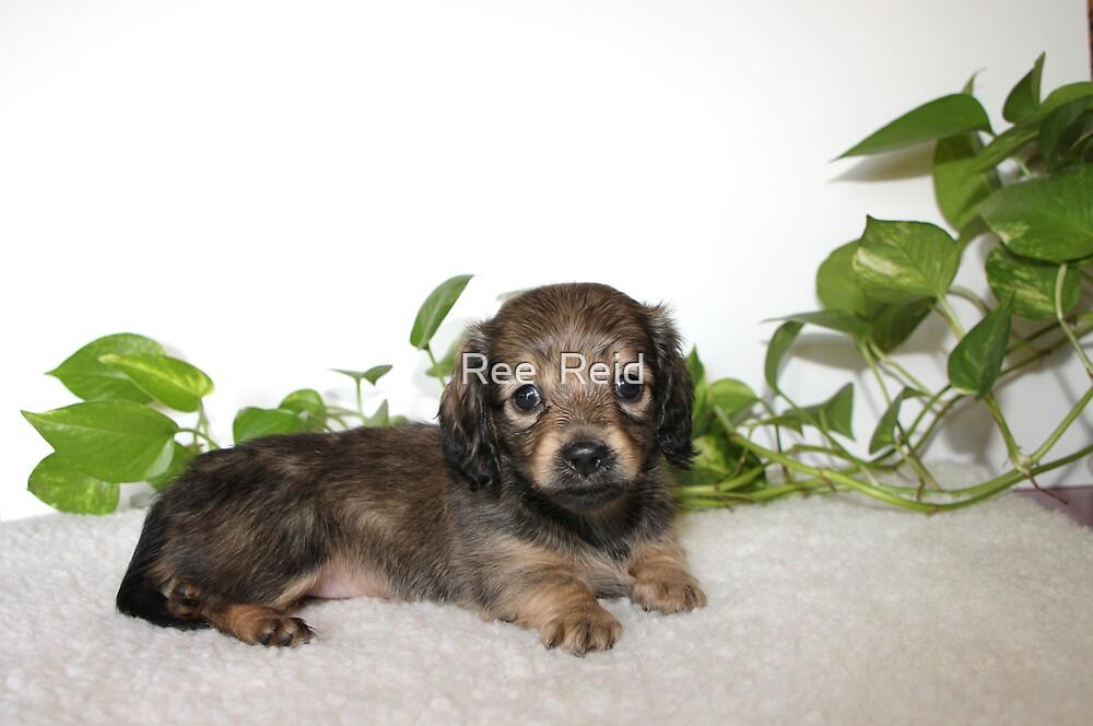 Adopt Me Please by Ree  Reid