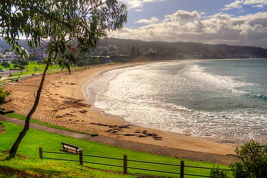 A bench with a view at Lorne in landscape by Elana Bailey