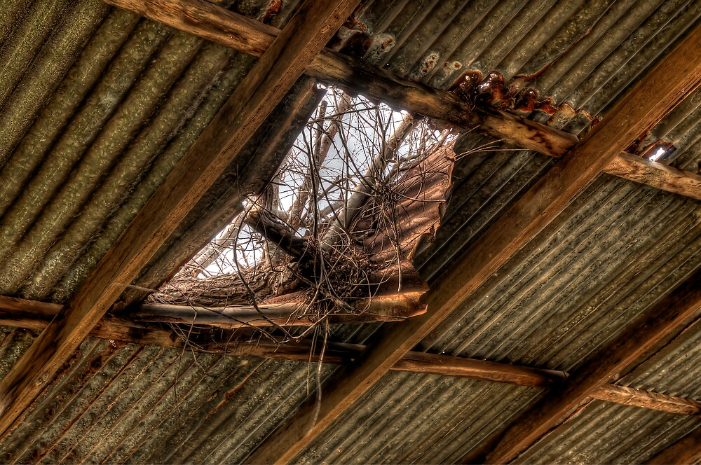 The Study of an old farm shed 3 - Experienced in HDR by Jason Ruth