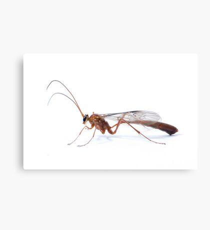 Parasitic Wasp Canvas Print