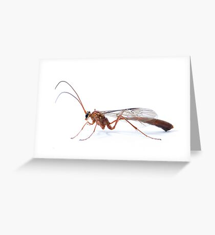 Parasitic Wasp Greeting Card