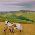 Dartmoor: Ponies on Hameldown by Robert parsons