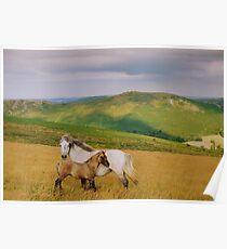 Dartmoor: Ponies on Hameldown Poster