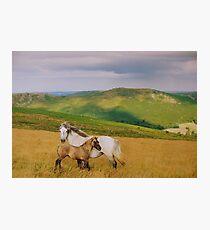 Dartmoor: Ponies on Hameldown Photographic Print
