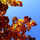 Autumn Feeling by TriciaDanby