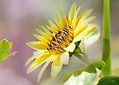 Sunny by Elaine  Manley