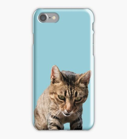 Tabby Back Looking Down Background Removed iPhone Case/Skin