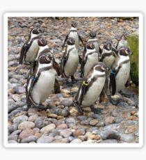 Humboldt Penguin Party Sticker
