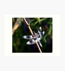 Eight-Spotted Skimmer Perched on Grass Art Print