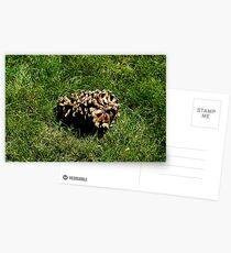 A Pinecone Postcards