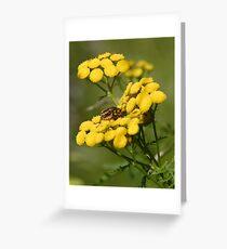 Pensylvania Leather-wings Greeting Card