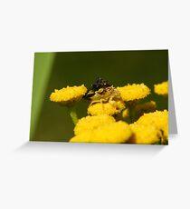 TWO Jagged Ambush Bugs Greeting Card