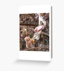 Ice Storm Pine Cones Greeting Card