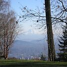 View from Pittock Mansion by AuntieBarbie