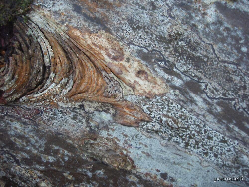 melting bark by yvesrossetti