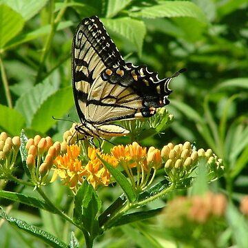 Butterfly on Flower by dekomsyrokcih
