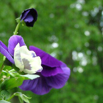Flower1 by dekomsyrokcih