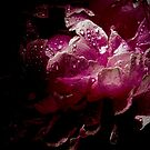 Mystery Pink Peony 5298 by Candy Paull