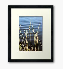 Blue seas and yellow grasses Framed Print