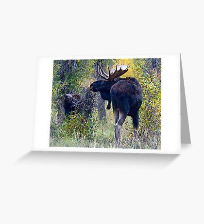 Moose Bull & Calf, Fall Colors Greeting Card