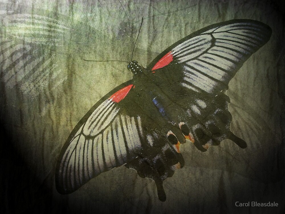 Love is Like a Butterfly by Carol Bleasdale