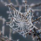 ~ Frozen Web ~ by Leeo