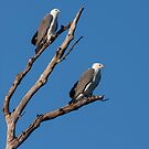 Sea Eagles by Leeo