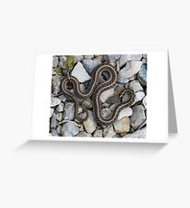 Speaks with forked tongue. Greeting Card