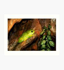 Green Tree Frog Kunstdruck