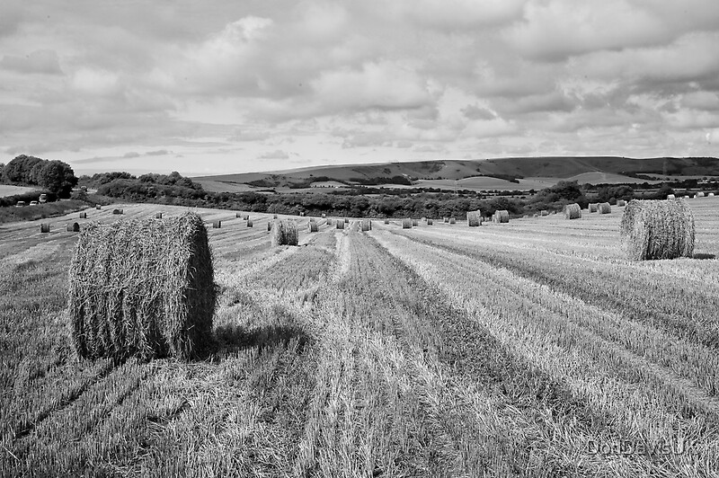 Quot Hay Bales Black And White Quot By Dondavisuk Redbubble