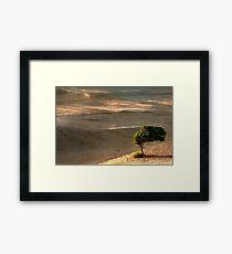 Windsurfer  Framed Print