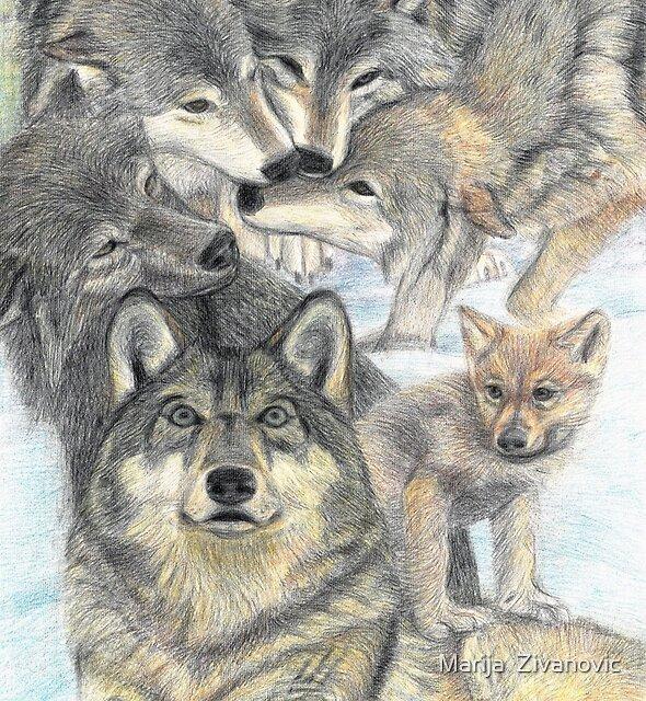 Wolf pack by Marija  Zivanovic