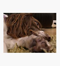 It's A Dog's Life... Photographic Print