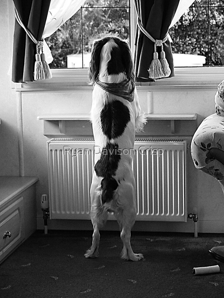 Watchdog by Ryan Davison Crisp