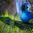 Sweet exotic bird by Colin Behrens