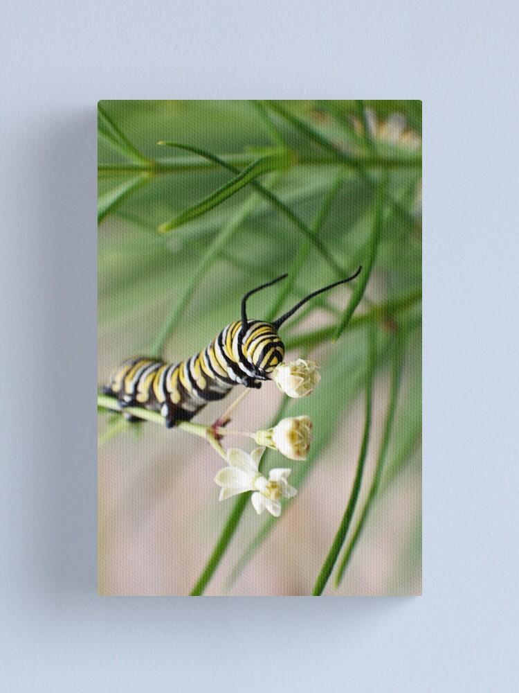 Alternate view of Monarch Caterpillar - 1 Canvas Print