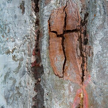 Eucalypt Bark by fotoWerner
